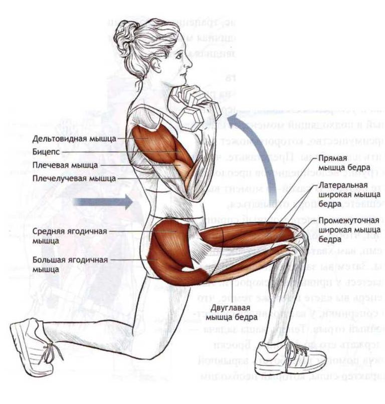 Выпад с гантелями - мышцы